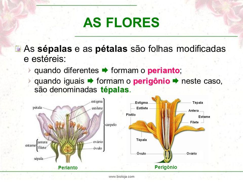 www.bioloja.com AS FLORES As sépalas e as pétalas são folhas modificadas e estéreis: perianto quando diferentes  formam o perianto; perigônio tépalas