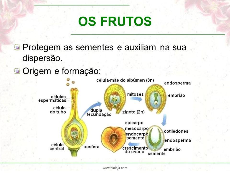 www.bioloja.com OS FRUTOS Protegem as sementes e auxiliam na sua dispersão. Origem e formação: