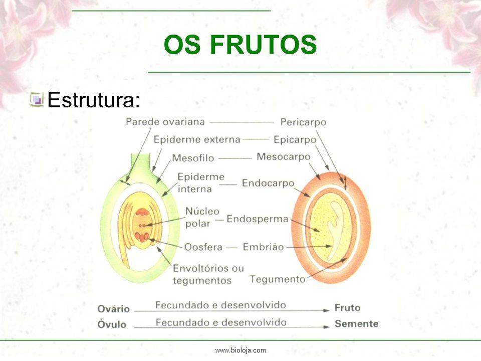 www.bioloja.com OS FRUTOS Estrutura: