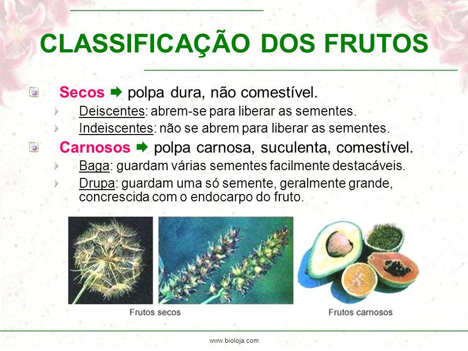 www.bioloja.com CLASSIFICAÇÃO DOS FRUTOS Secos  polpa dura, não comestível. Deiscentes: abrem-se para liberar as sementes. Indeiscentes: não se abrem