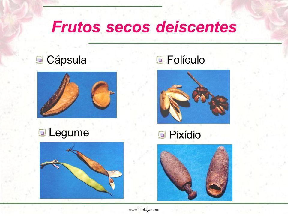 www.bioloja.com Frutos secos deiscentes CápsulaFolículo Legume Pixídio