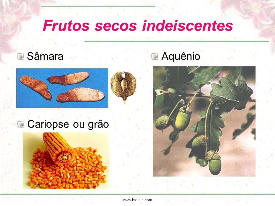 www.bioloja.com Frutos secos indeiscentes SâmaraAquênio Cariopse ou grão