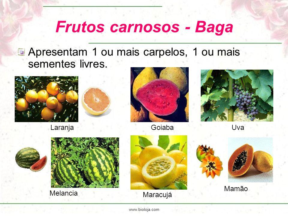 www.bioloja.com Frutos carnosos - Baga Apresentam 1 ou mais carpelos, 1 ou mais sementes livres. Laranja Goiaba Uva Melancia Maracujá Mamão