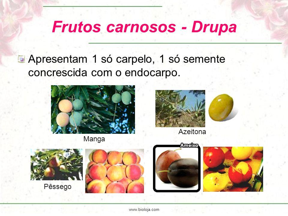 www.bioloja.com Frutos carnosos - Drupa Apresentam 1 só carpelo, 1 só semente concrescida com o endocarpo. Manga Azeitona Pêssego