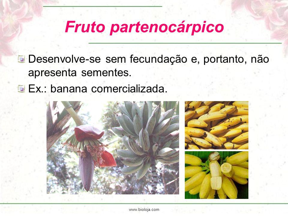 www.bioloja.com Fruto partenocárpico Desenvolve-se sem fecundação e, portanto, não apresenta sementes. Ex.: banana comercializada.