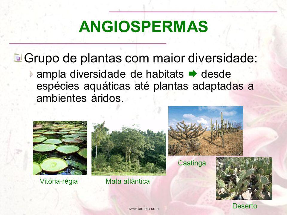 www.bioloja.com ANGIOSPERMAS Grupo de plantas com maior diversidade: ampla diversidade de habitats  desde espécies aquáticas até plantas adaptadas a