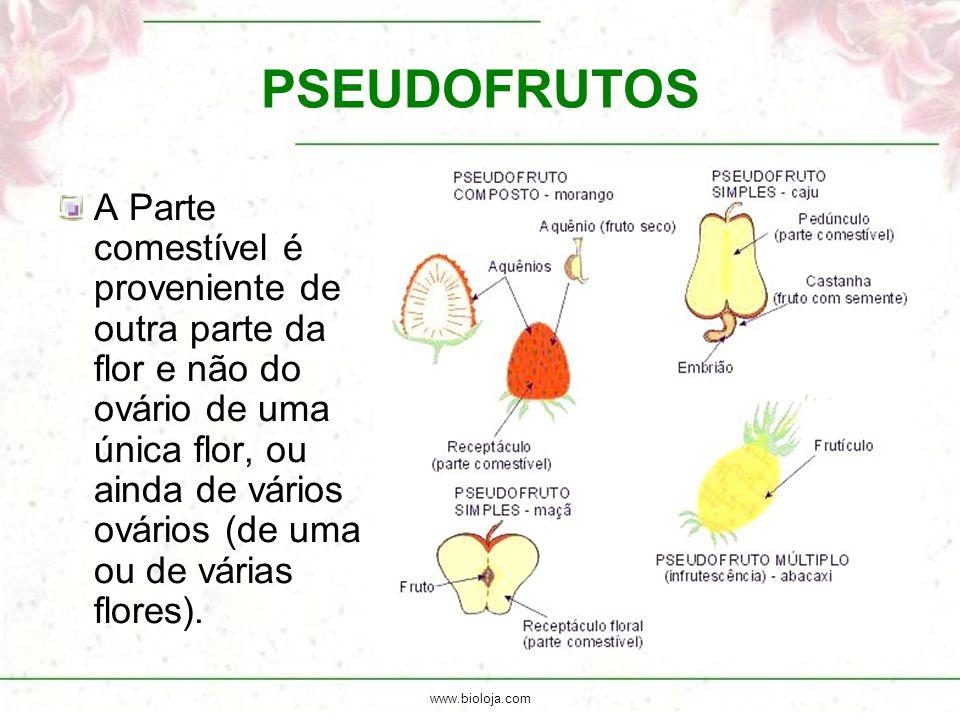 www.bioloja.com PSEUDOFRUTOS A Parte comestível é proveniente de outra parte da flor e não do ovário de uma única flor, ou ainda de vários ovários (de