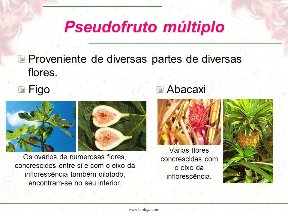 www.bioloja.com Pseudofruto múltiplo Proveniente de diversas partes de diversas flores. FigoAbacaxi Várias flores concrescidas com o eixo da infloresc