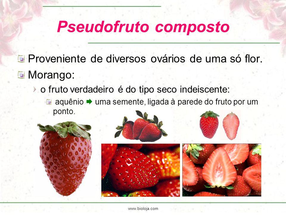 www.bioloja.com Pseudofruto composto Proveniente de diversos ovários de uma só flor. Morango: o fruto verdadeiro é do tipo seco indeiscente: aquênio 
