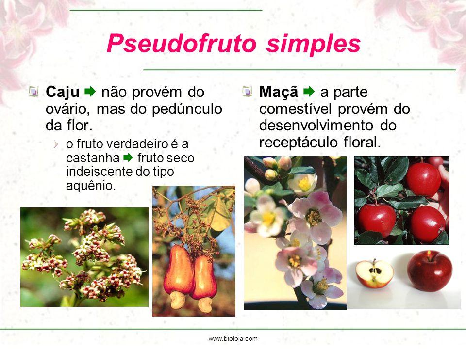 www.bioloja.com Pseudofruto simples Caju  não provém do ovário, mas do pedúnculo da flor. o fruto verdadeiro é a castanha  fruto seco indeiscente do