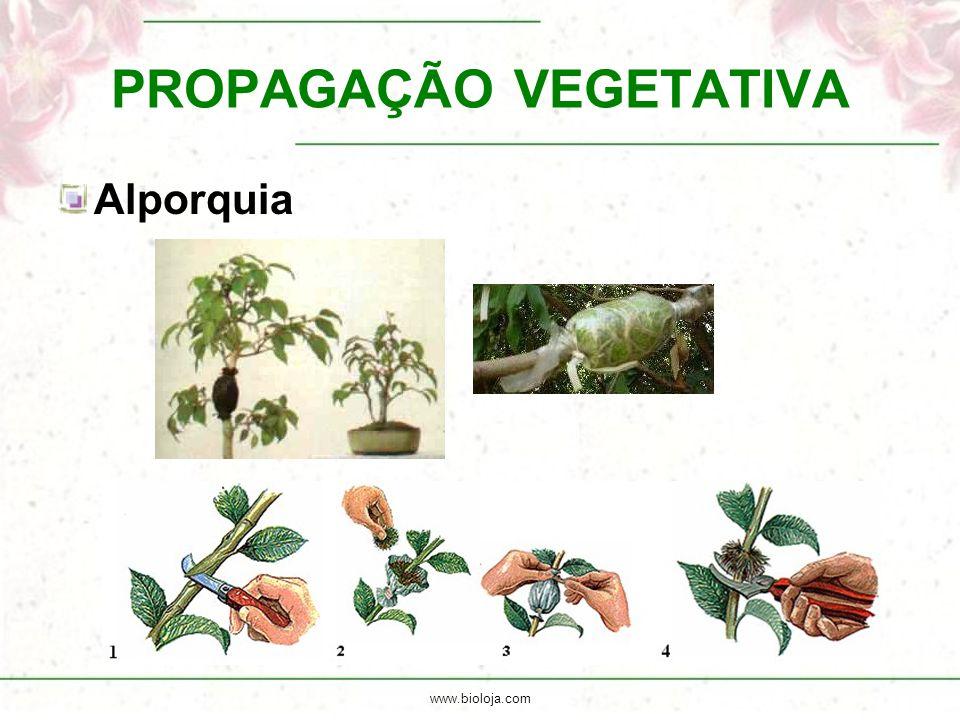 www.bioloja.com PROPAGAÇÃO VEGETATIVA Alporquia