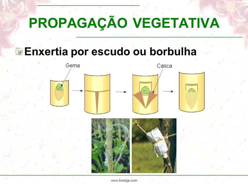www.bioloja.com PROPAGAÇÃO VEGETATIVA Enxertia por escudo ou borbulha