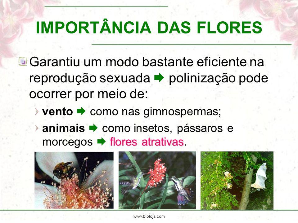 www.bioloja.com IMPORTÂNCIA DAS FLORES Garantiu um modo bastante eficiente na reprodução sexuada  polinização pode ocorrer por meio de: vento  como