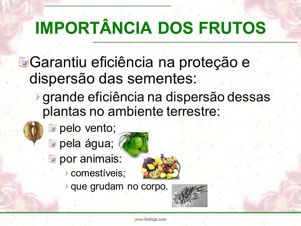 www.bioloja.com IMPORTÂNCIA DOS FRUTOS Garantiu eficiência na proteção e dispersão das sementes: grande eficiência na dispersão dessas plantas no ambi