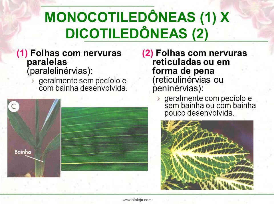 www.bioloja.com MONOCOTILEDÔNEAS (1) X DICOTILEDÔNEAS (2) (1) Folhas com nervuras paralelas (paralelinérvias): geralmente sem pecíolo e com bainha des