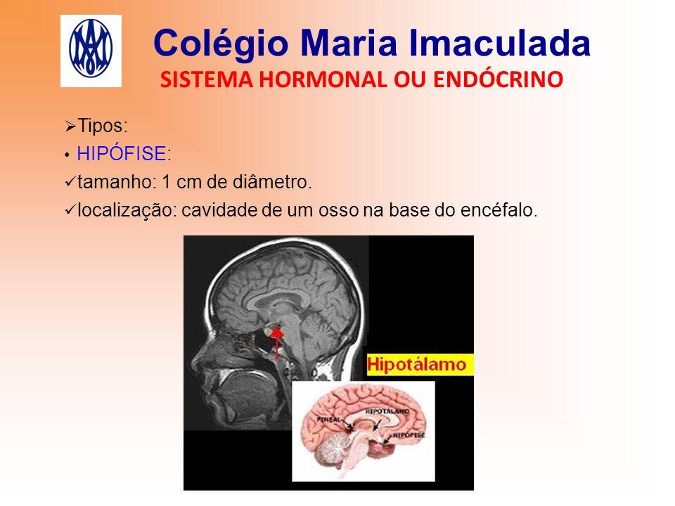 Colégio Maria Imaculada SISTEMA HORMONAL OU ENDÓCRINO  Tipos: HIPÓFISE: tamanho: 1 cm de diâmetro. localização: cavidade de um osso na base do encéfa