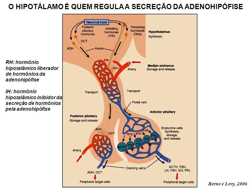 O HIPOTÁLAMO É QUEM REGULA A SECREÇÃO DA ADENOHIPÓFISE Berne e Levy, 2006 RH: hormônio hipotalâmico liberador de hormônios da adenohipófise IH: hormôn