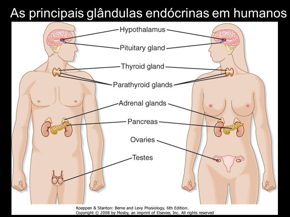 As principais glândulas endócrinas em humanos