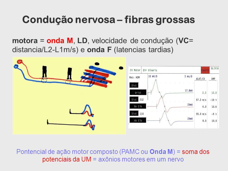 motora = onda M, LD, velocidade de condução (VC= distancia/L2-L1m/s) e onda F (latencias tardias) Pontencial de ação motor composto (PAMC ou Onda M) =