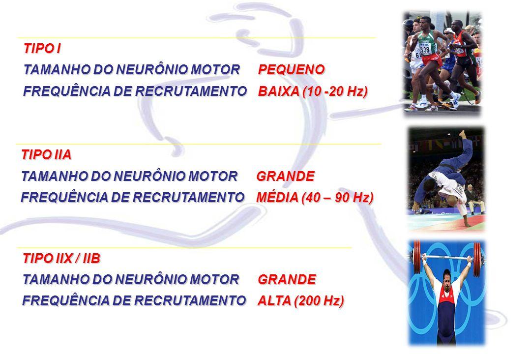 TIPO IIA TAMANHO DO NEURÔNIO MOTOR GRANDE FREQUÊNCIA DE RECRUTAMENTO MÉDIA (40 – 90 Hz) TIPO IIX / IIB TAMANHO DO NEURÔNIO MOTOR GRANDE FREQUÊNCIA DE RECRUTAMENTO ALTA (200 Hz) TIPO I TAMANHO DO NEURÔNIO MOTOR PEQUENO FREQUÊNCIA DE RECRUTAMENTO BAIXA (10 -20 Hz)