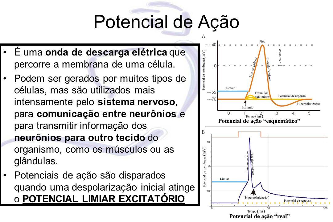 Potencial de Ação É uma onda de descarga elétrica que percorre a membrana de uma célula. Podem ser gerados por muitos tipos de células, mas são utiliz