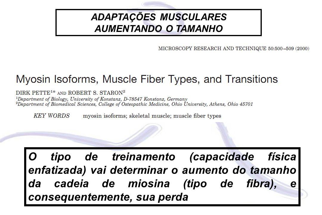 O tipo de treinamento (capacidade física enfatizada) vai determinar o aumento do tamanho da cadeia de miosina (tipo de fibra), e consequentemente, sua perda ADAPTAÇÕES MUSCULARES AUMENTANDO O TAMANHO