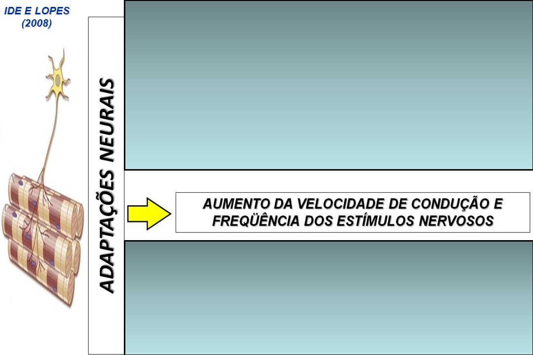 IDE E LOPES (2008)