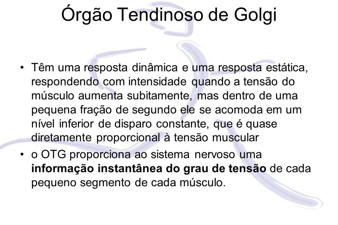 Órgão Tendinoso de Golgi Têm uma resposta dinâmica e uma resposta estática, respondendo com intensidade quando a tensão do músculo aumenta subitamente