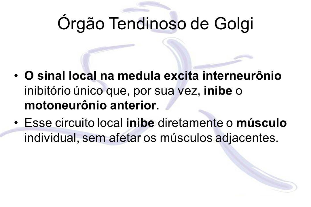 O sinal local na medula excita interneurônio inibitório único que, por sua vez, inibe o motoneurônio anterior. Esse circuito local inibe diretamente o