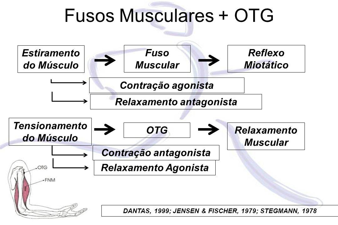 Fusos Musculares + OTG Fuso Muscular Estiramento do Músculo Reflexo Miotático OTG Tensionamento do Músculo Relaxamento Muscular DANTAS, 1999; JENSEN &