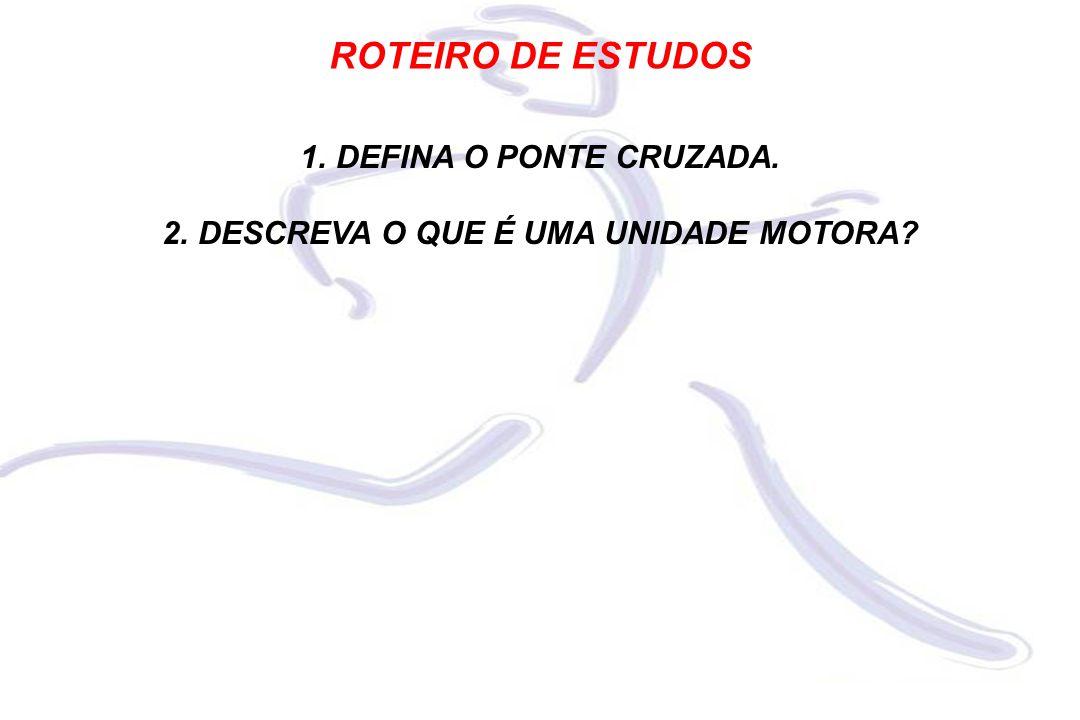ROTEIRO DE ESTUDOS 1.DEFINA O PONTE CRUZADA. 2.DESCREVA O QUE É UMA UNIDADE MOTORA?