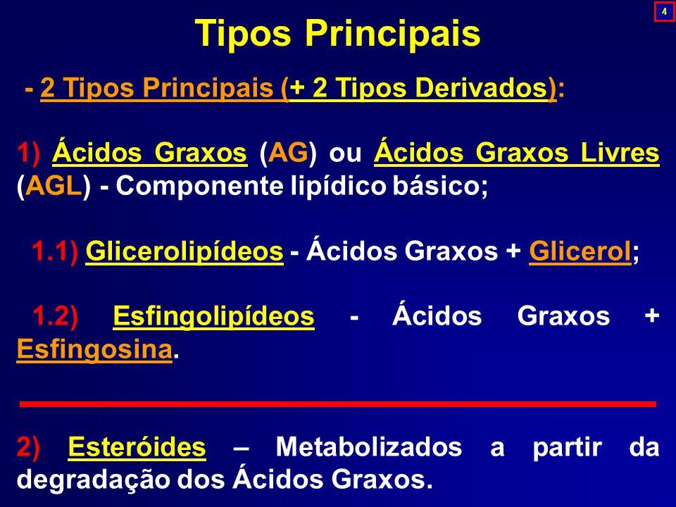 - 2 Tipos Principais (+ 2 Tipos Derivados): 1) Ácidos Graxos (AG) ou Ácidos Graxos Livres (AGL) - Componente lipídico básico; 1.1) Glicerolipídeos - Ácidos Graxos + Glicerol; 1.2) Esfingolipídeos - Ácidos Graxos + Esfingosina.