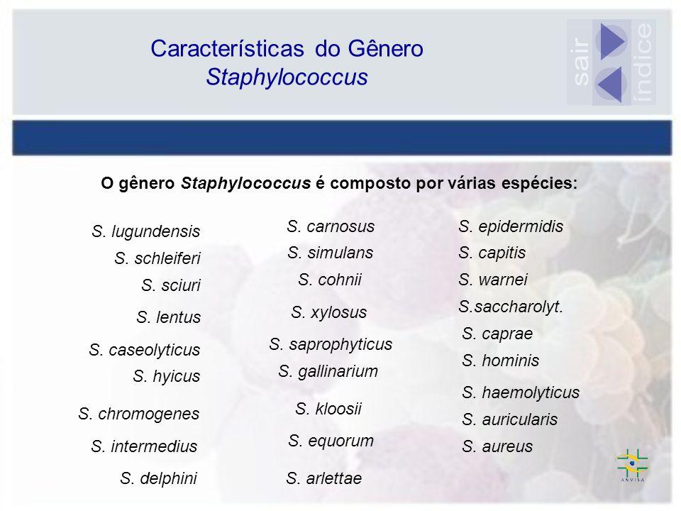 O gênero Staphylococcus é composto por várias espécies: S. lugundensis S. schleiferi S. sciuri S. lentus S. caseolyticus S. hyicus S. chromogenes S. i