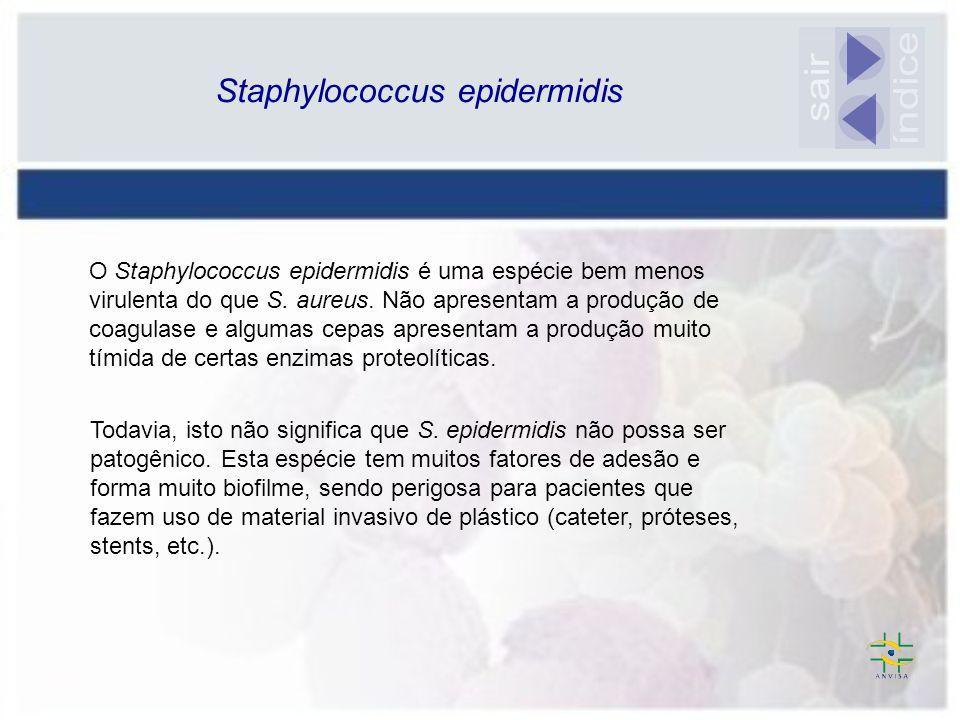 O Staphylococcus epidermidis é uma espécie bem menos virulenta do que S. aureus. Não apresentam a produção de coagulase e algumas cepas apresentam a p