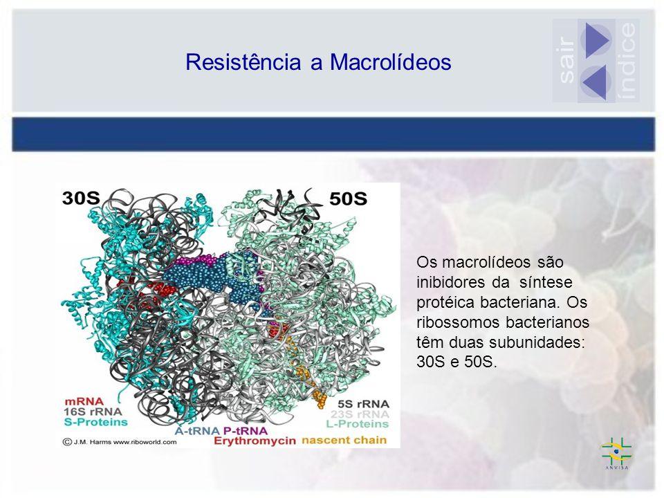 Resistência a Macrolídeos Os macrolídeos são inibidores da síntese protéica bacteriana. Os ribossomos bacterianos têm duas subunidades: 30S e 50S.