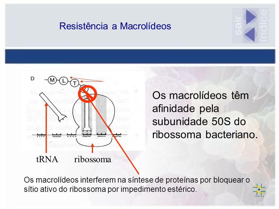 Os macrolídeos têm afinidade pela subunidade 50S do ribossoma bacteriano. ribossomatRNA mRNA aa Os macrolídeos interferem na síntese de proteínas por