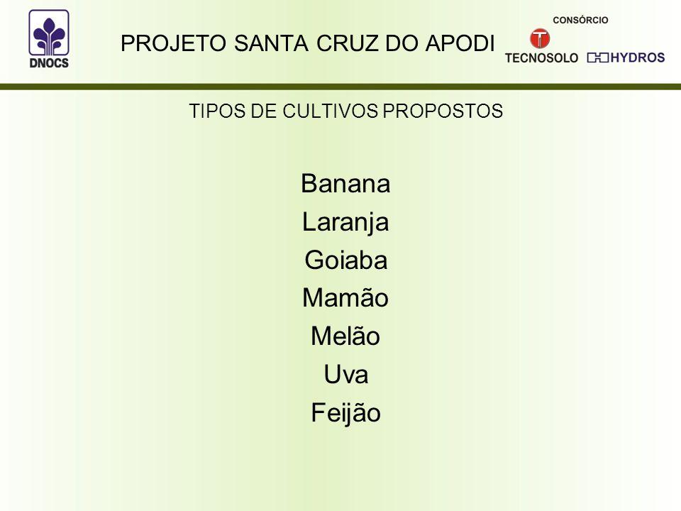 PROJETO SANTA CRUZ DO APODI TIPOS DE CULTIVOS PROPOSTOS Banana Laranja Goiaba Mamão Melão Uva Feijão