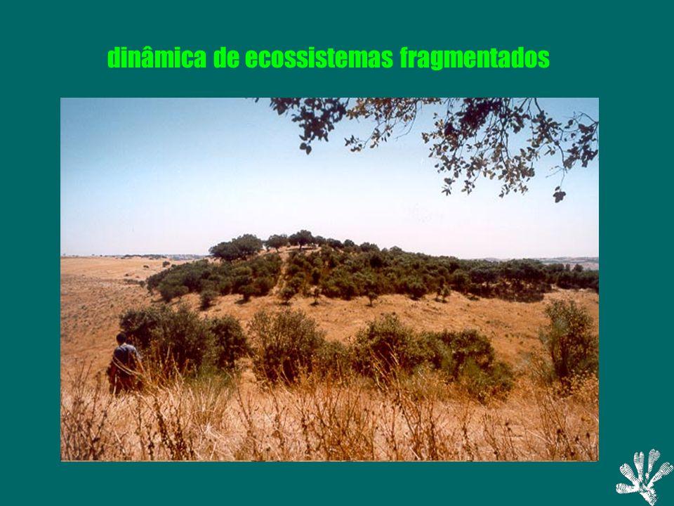 dinâmica de ecossistemas fragmentados