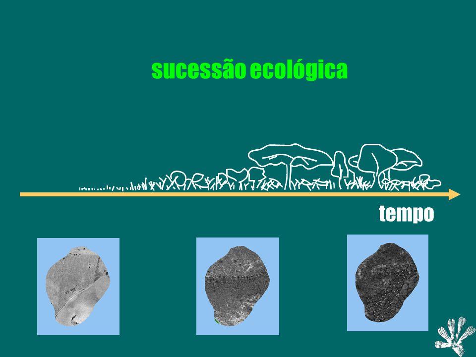 tempo sucessão ecológica