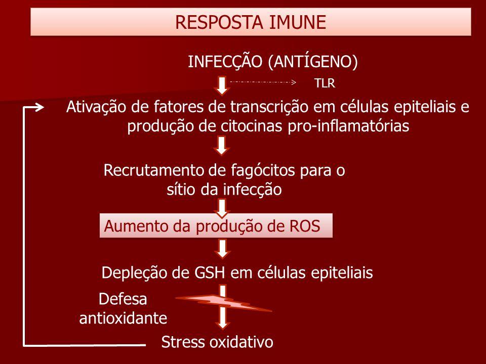 Ativação de fatores de transcrição em células epiteliais e produção de citocinas pro-inflamatórias Stress oxidativo RESPOSTA IMUNE INFECÇÃO (ANTÍGENO)