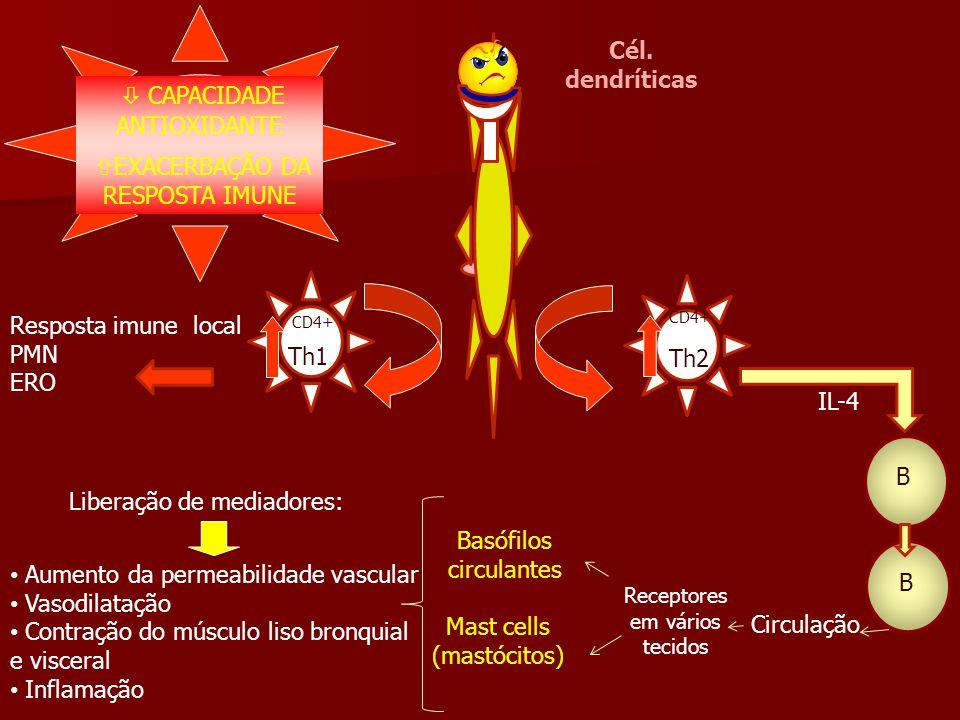 IL-4 B B Circulação Receptores em vários tecidos Resposta imune local PMN ERO Cél. dendríticas  CAPACIDADE ANTIOXIDANTE  EXACERBAÇÃO DA RESPOSTA IMU