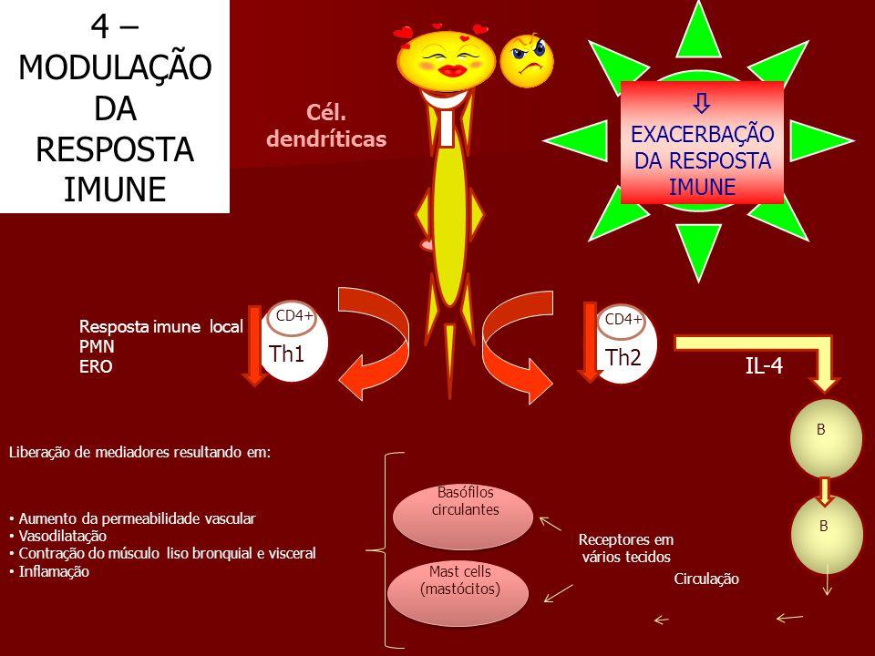 CD4+ Th1 CD4+ Th2 IL-4 B B Circulação Receptores em vários tecidos Basófilos circulantes Liberação de mediadores resultando em: Aumento da permeabilid