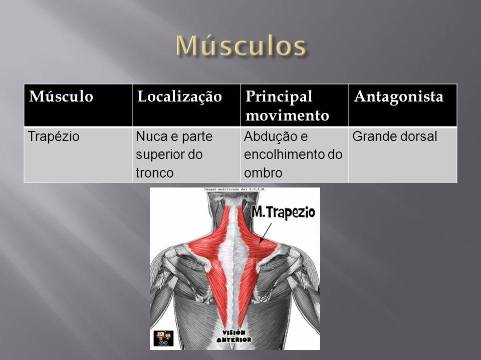 MúsculoLocalizaçãoPrincipal movimento Antagonista TrapézioNuca e parte superior do tronco Abdução e encolhimento do ombro Grande dorsal