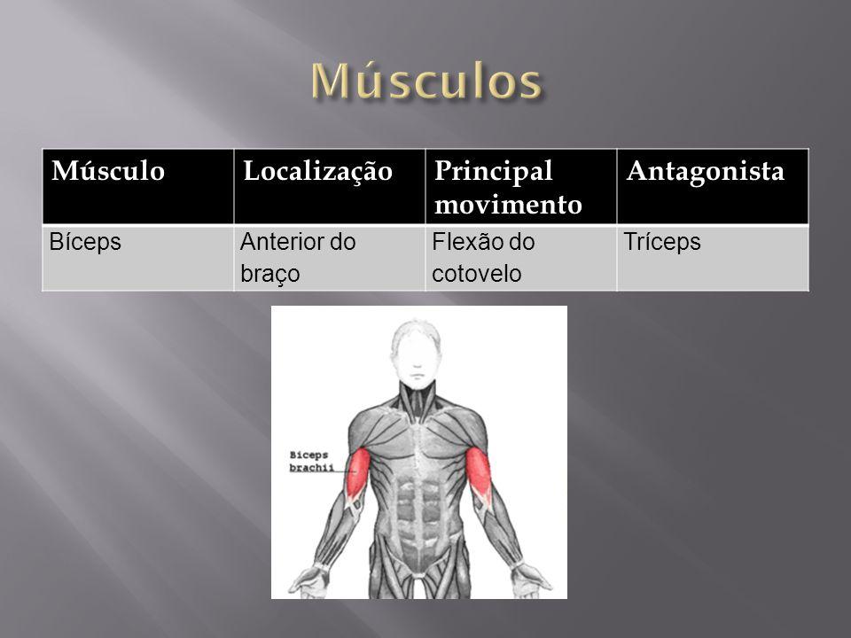 MúsculoLocalizaçãoPrincipal movimento Antagonista BícepsAnterior do braço Flexão do cotovelo Tríceps