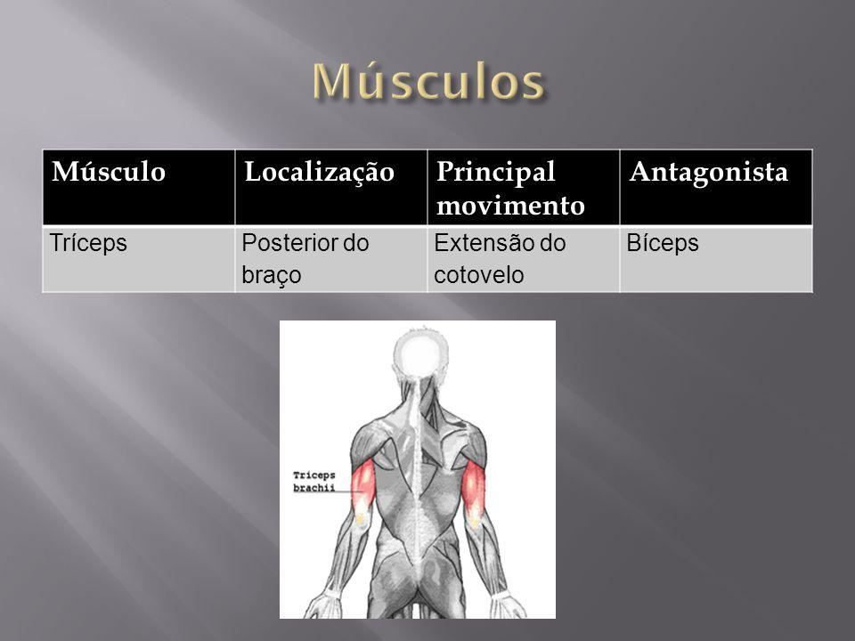 MúsculoLocalizaçãoPrincipal movimento Antagonista TrícepsPosterior do braço Extensão do cotovelo Bíceps