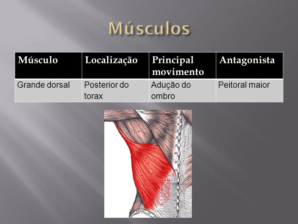 MúsculoLocalizaçãoPrincipal movimento Antagonista Grande dorsalPosterior do torax Adução do ombro Peitoral maior