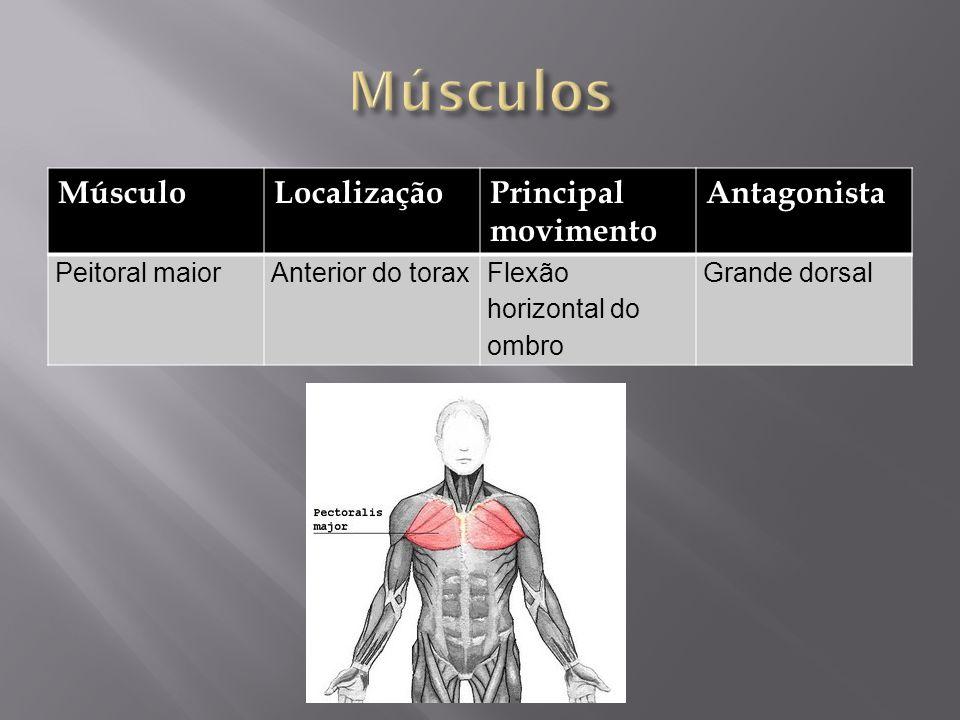 MúsculoLocalizaçãoPrincipal movimento Antagonista Peitoral maiorAnterior do toraxFlexão horizontal do ombro Grande dorsal