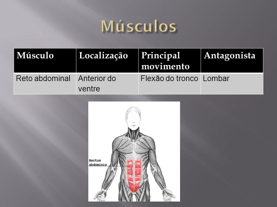 MúsculoLocalizaçãoPrincipal movimento Antagonista Reto abdominalAnterior do ventre Flexão do troncoLombar