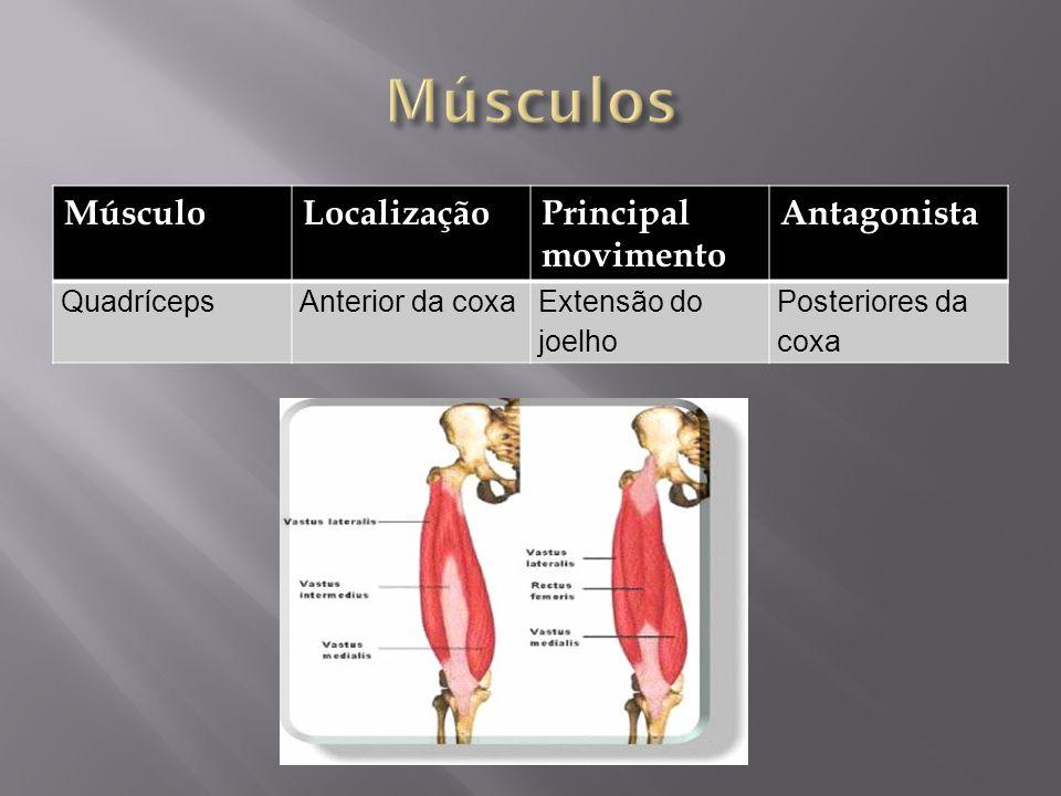 MúsculoLocalizaçãoPrincipal movimento Antagonista QuadrícepsAnterior da coxaExtensão do joelho Posteriores da coxa