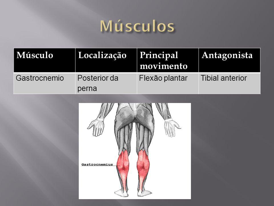 MúsculoLocalizaçãoPrincipal movimento Antagonista GastrocnemioPosterior da perna Flexão plantarTibial anterior